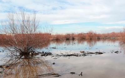 Ruta de la Laguna – Avutardas